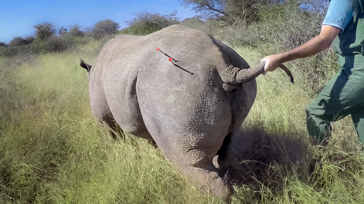 It's official! 2017 rhino translocations will go ahead