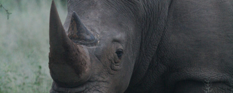 STATEMENT: RHINO POACHING